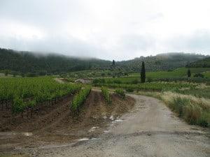Montalcino (photo : FA)