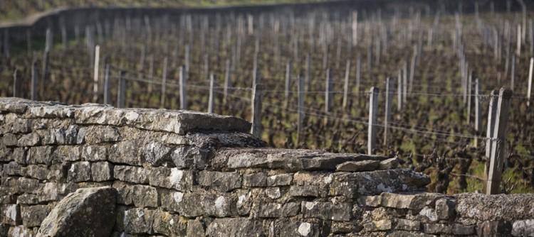 , Bourgogne: Quand le climat prend une majuscule