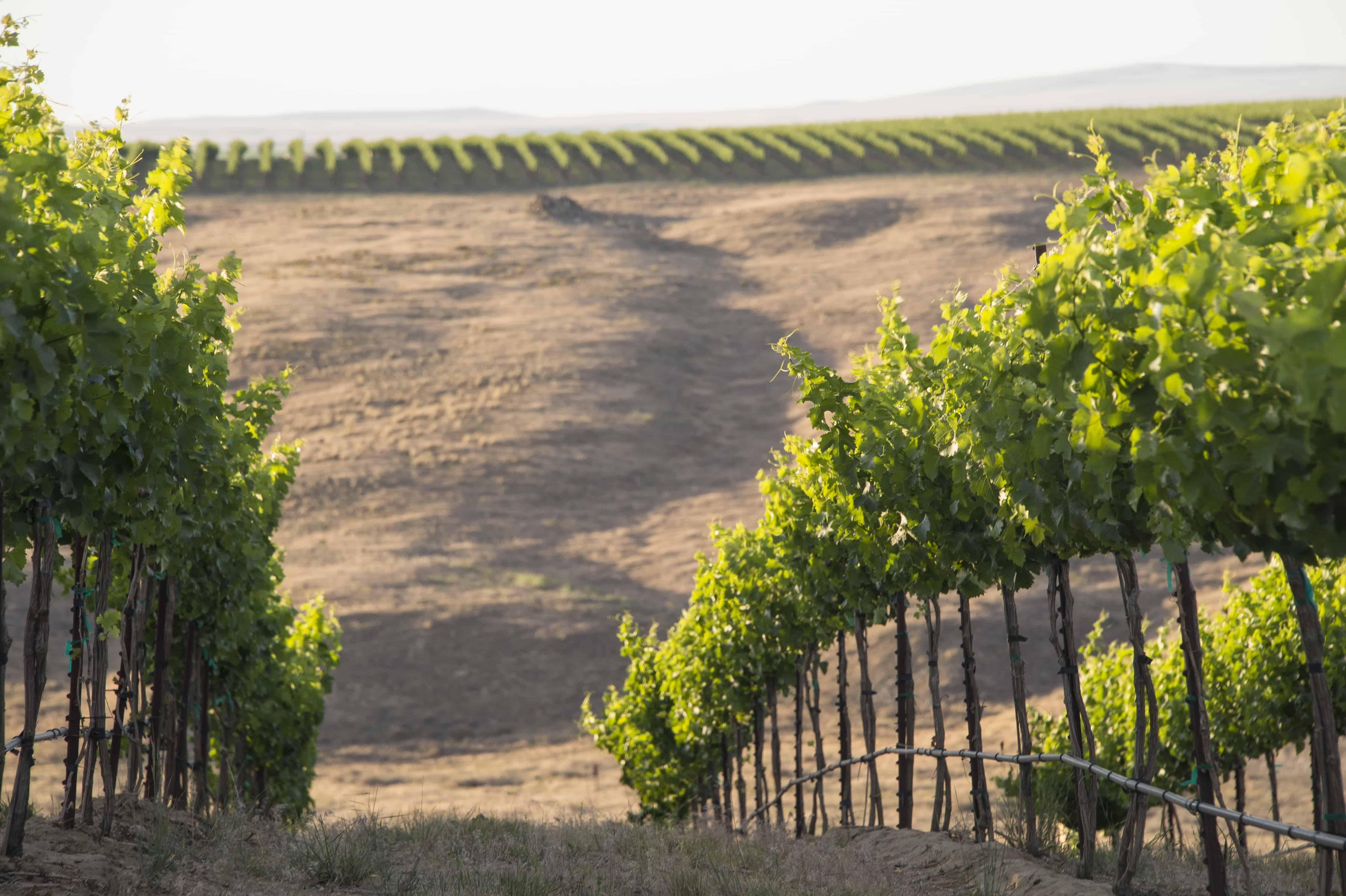vins de l'État de Washington, Cinq vins de l'État de Washington pour fêter le 4 juillet