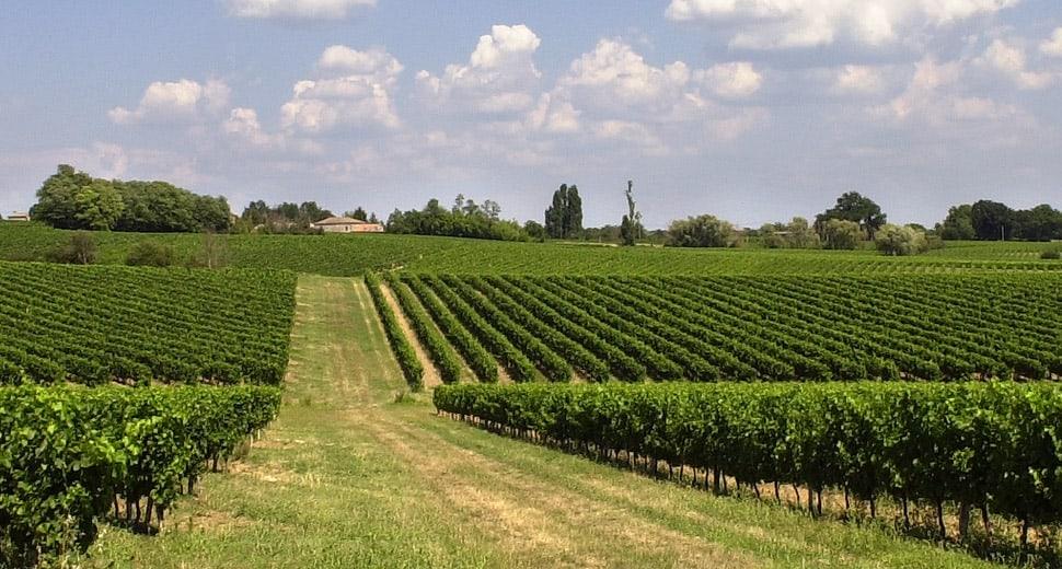 cépages portugais Bordeaux, Des cépages portugais dans les Bordeaux