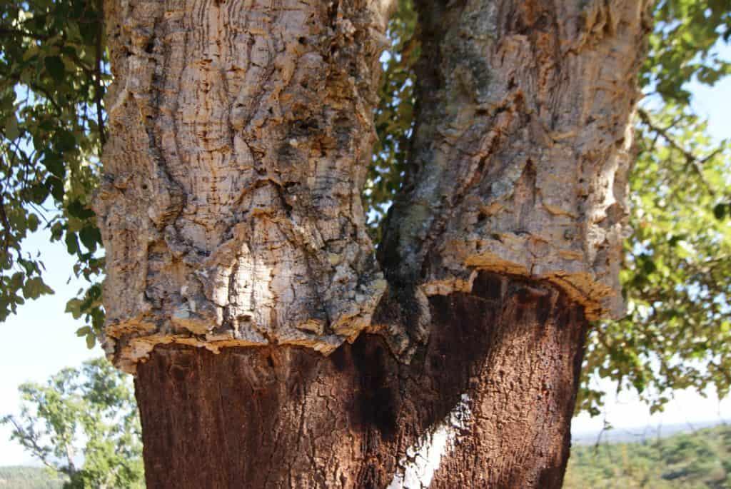 Écorce du chêne-liège