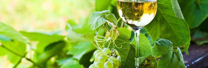Et si on buvait du vinho verde ?, Et si on buvait du vinho verde ?