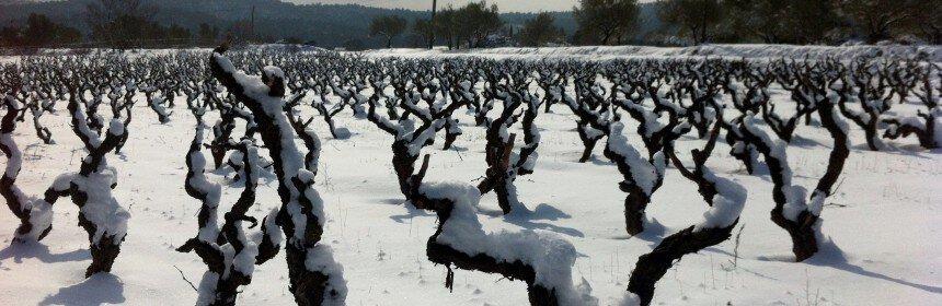 , Quelques vins pour briser la glace de 2016 !