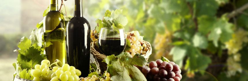 , 10 vins bio à découvrir