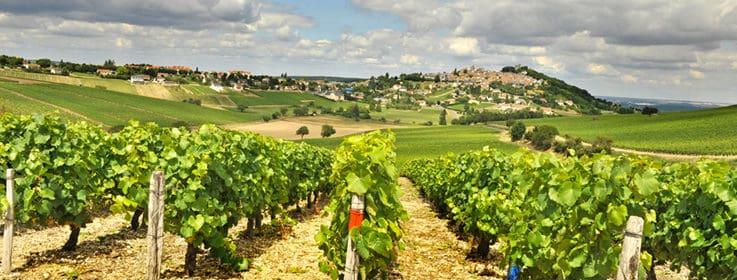 vin de la Loire, 10 vins pour découvrir la Vallée de la Loire