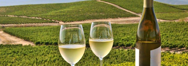 vin le plus populaire au Québec, Cinq bouteilles du cépage préféré des Québécois