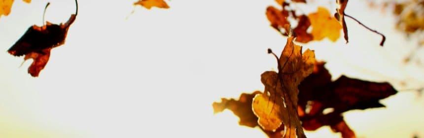 Vin d'automne