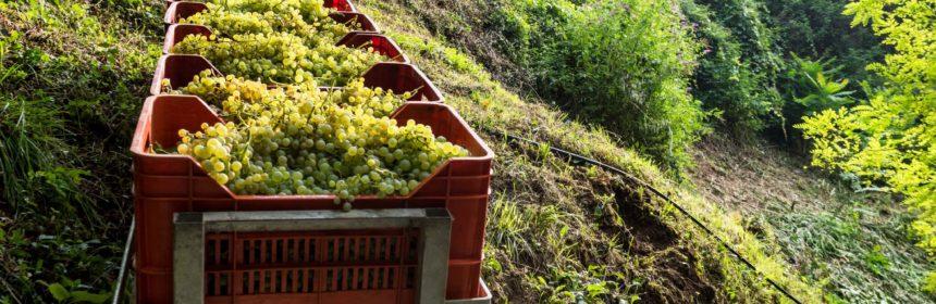 À la recherche du meilleur prosecco - Tout sur le Vin