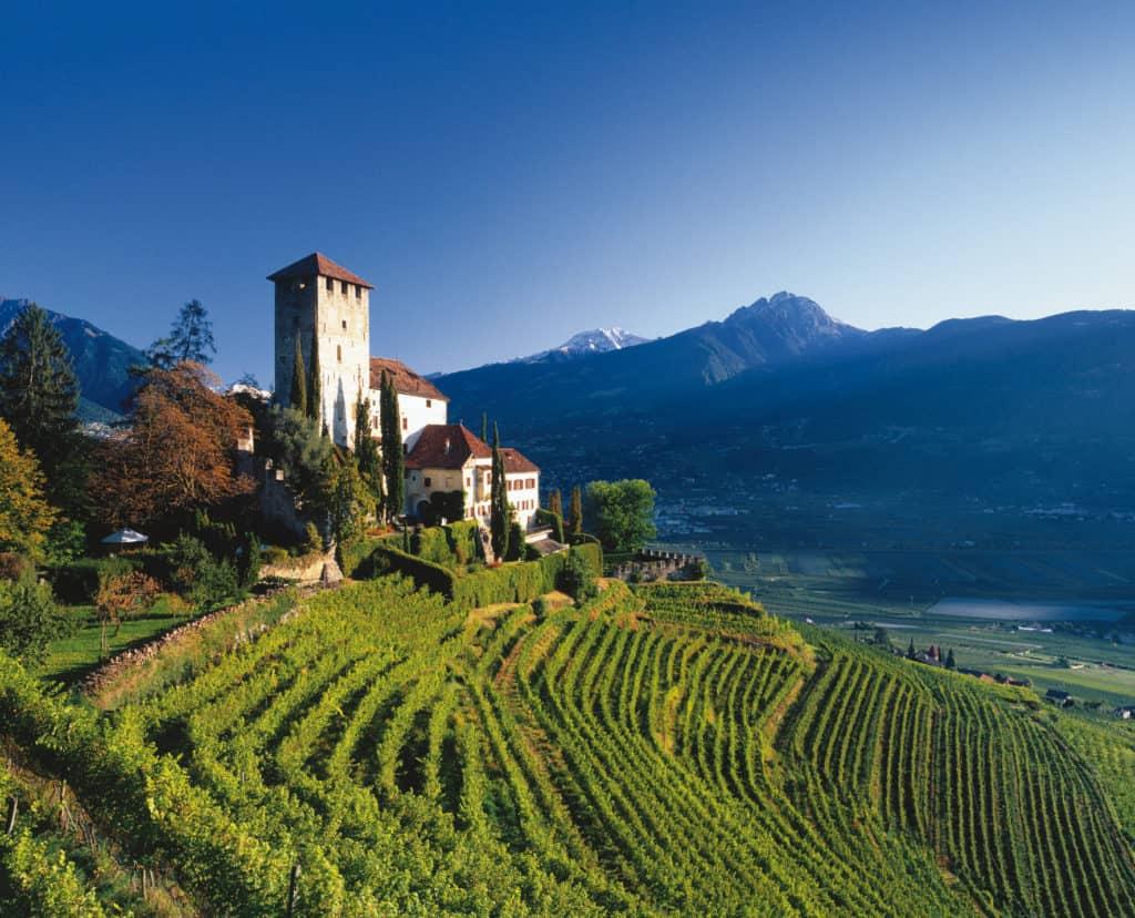 Alto adige - Pinot Grigio - Tout sur le Vin