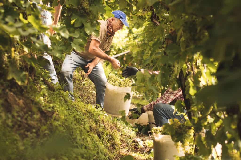 Vignobles héroïques du Conegliano Valdobbiadene DOCG Tout sur le Vin