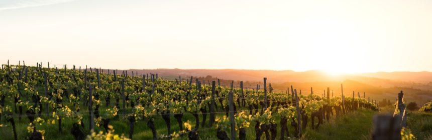 Soigneux qui comme Ulysse - Tout sur le Vin