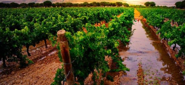 Ribera del Duero - Tout sur le Vin