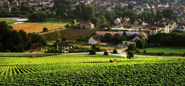 Vous avez dit chardonnay bourguignon - Tout sur le Vin