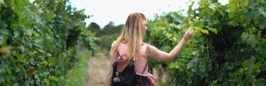Voyage vinicole en Espagne - Tout sur le Vin