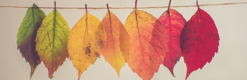 Trois vins d 'automne - Tout sur le Vin