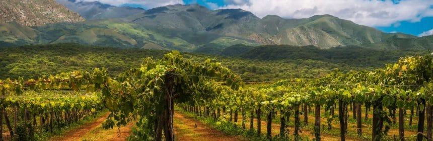 bon vin argentin, Un pays à découvrir en 7 vins