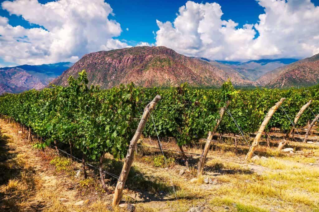 Argentine - Tout sur le Vin