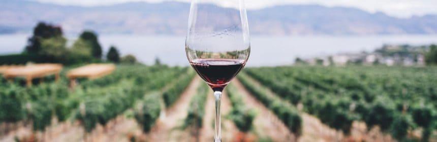 Trois vins bio - Tout sur le Vin