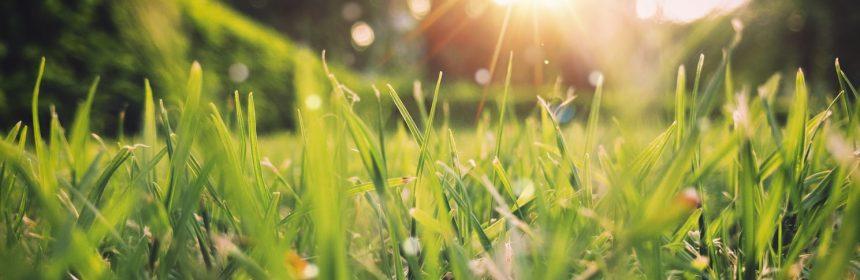 Gazon vert avec du soleil 10 bons vins blancs pour accueillir le printemps - Tout sur le Vin
