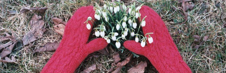 Des mitaines rouges qui encerclent des perce-neige