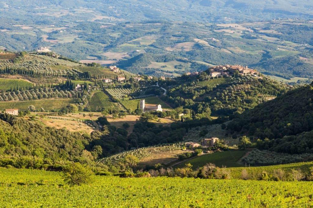 Montalcino et ses vignes