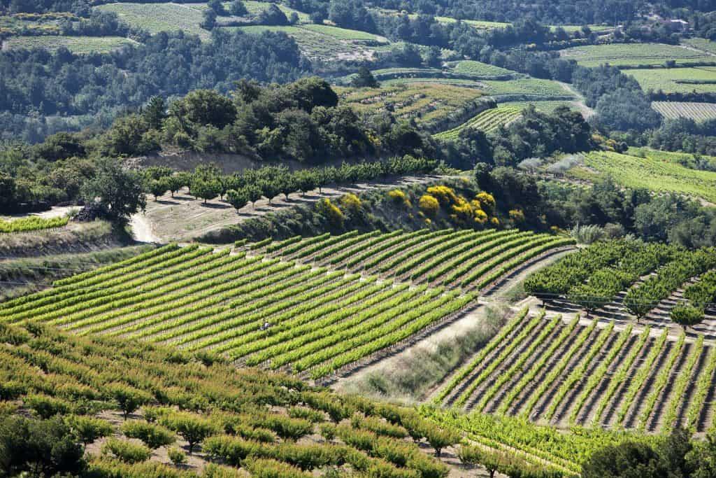 Paysage du Côtes du Rhone