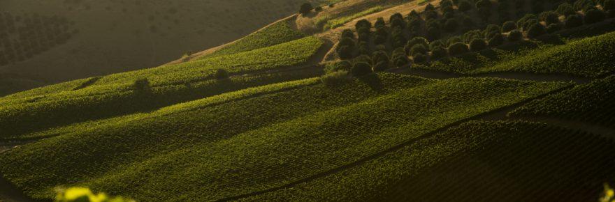 Vignoble de Cusumano en Sicile