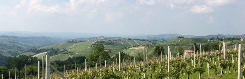 Le vin du Piémont - Tout sur le Vin