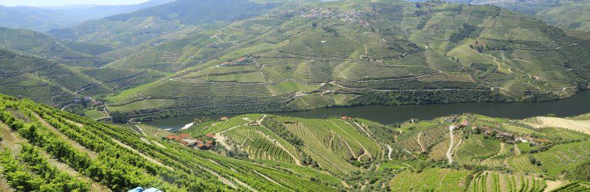 Vignobles du Portugal