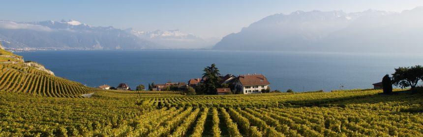 vin suisse, La Suisse, pépite(s) méconnue(s)